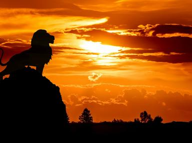 Lion King The Quizzes, Trivia and Puzzles