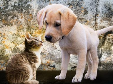 Peoples Pets Quizzes, Trivia and Puzzles