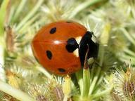 Invertebrates for Kids Quizzes, Trivia and Puzzles