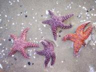 Quiz about Starfish and Sand Dollars