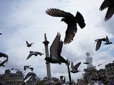 Wild Birds UK Quizzes, Trivia and Puzzles