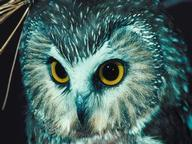 Owls Quizzes, Trivia and Puzzles