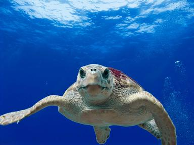 Turtles Quizzes, Trivia and Puzzles