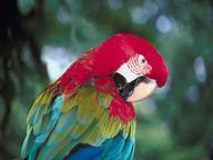 Parrots Quizzes, Trivia and Puzzles
