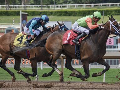 Quiz about Pedigrees Kentucky Derby Winners