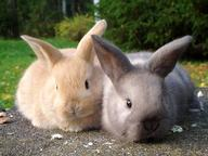 Rabbits Quizzes, Trivia and Puzzles