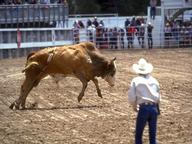 Rodeo Quizzes, Trivia and Puzzles
