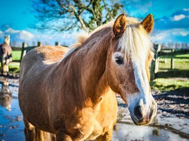 Horses Quizzes, Trivia and Puzzles