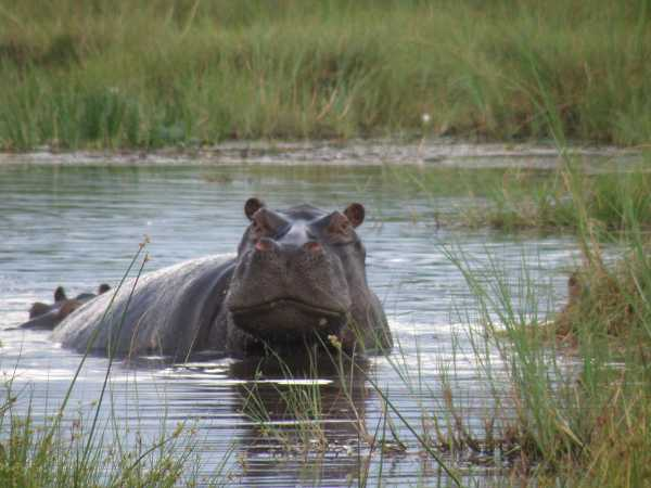 On Safari in South Luangwa National Park Quiz | 10 Questions