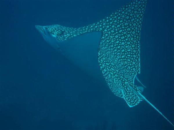 My cuban diving adventure quiz 10 questions for Shark tank fairy door