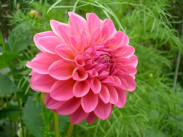 Create an all-American flower garden by using only plants that are native to the United States. Many species of flowers are native to this country, allowing a creative gardener to grow a spectacular display of truly homegrown flowers.