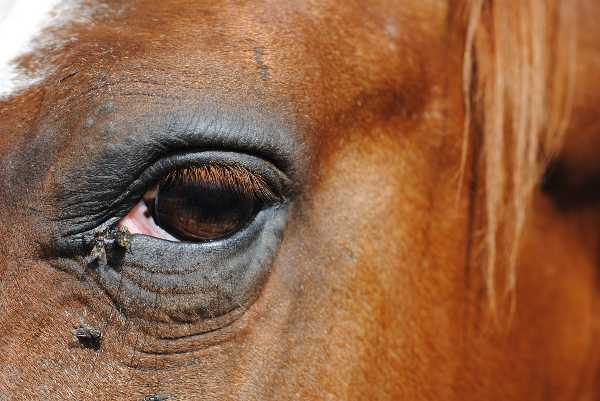 A Visual Guide to External Horse Anatomy Quiz | 10 Questions